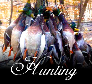 Arkansas duck hunts