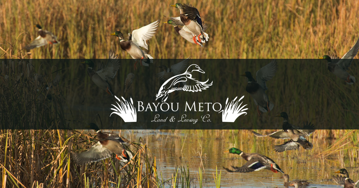 Bayou Meto Land And Leasing Arkansas Duck Hunting Duck